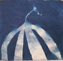 "Kelp Arch, cyanotype, 20x20"", Submerged series"