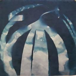 """Kelp Twist, cyanotype, 20x20"""", Submerged series"""