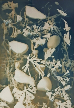 Remanents, bleached cyanotype, Submerged series