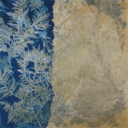 """Golden Ghost Tree, bleached cyanotype with gilded woodcut, 20x20"""" Woodland series"""