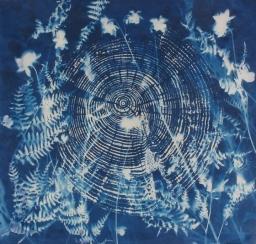 "Nursey Tree, cyanotype, 20x20"" Woodland series"