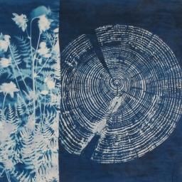 """New Growth, cyanotype, 20x20"""" Woodland series"""
